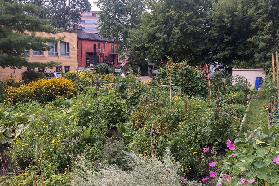 Jardin collectif Pheonix